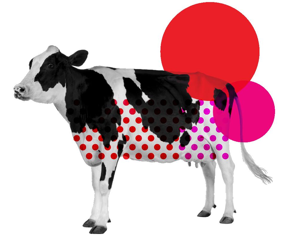 Krava na cvoke